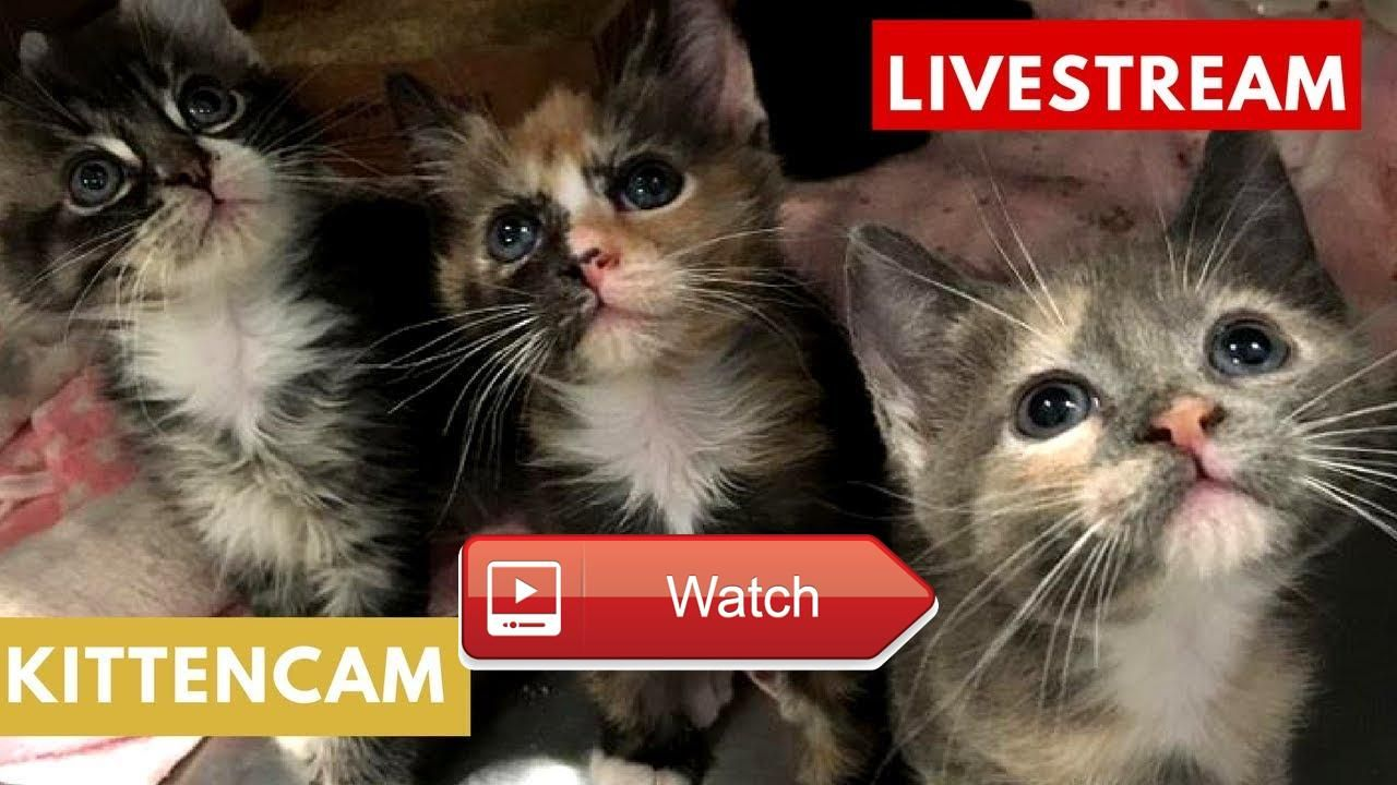Kitten Cam 🐱 Day Goodnight Kitties Powered By Cute Avalanche