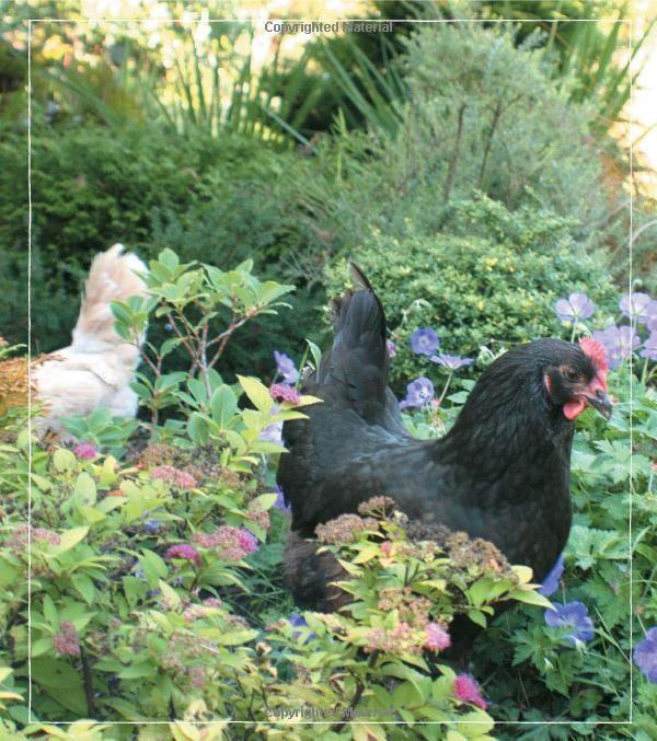 a91fe007390822bdf917e40cfc0cf2b9 - Free Range Chicken Gardens Jessi Bloom