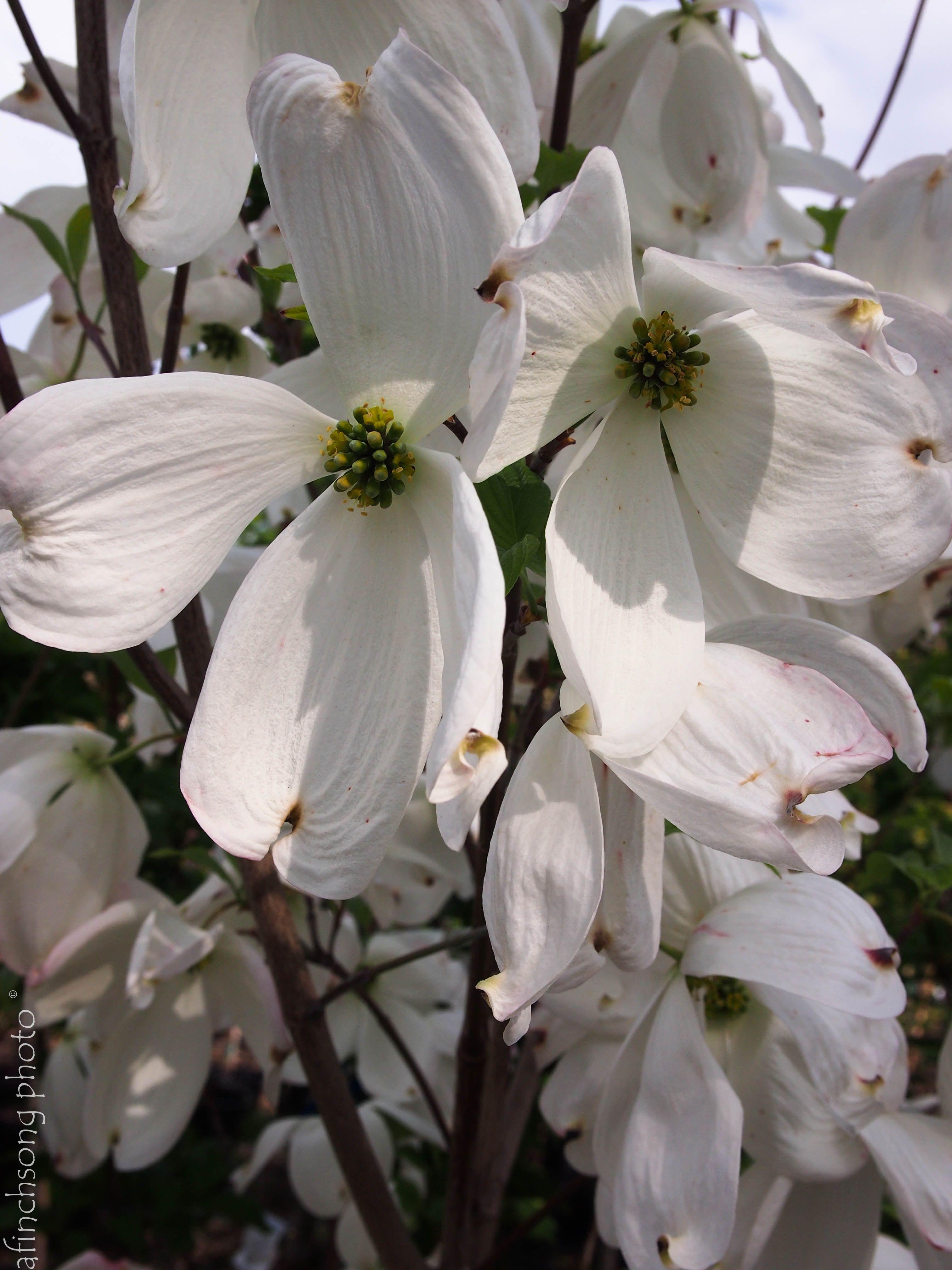 Pin On Flowering Trees
