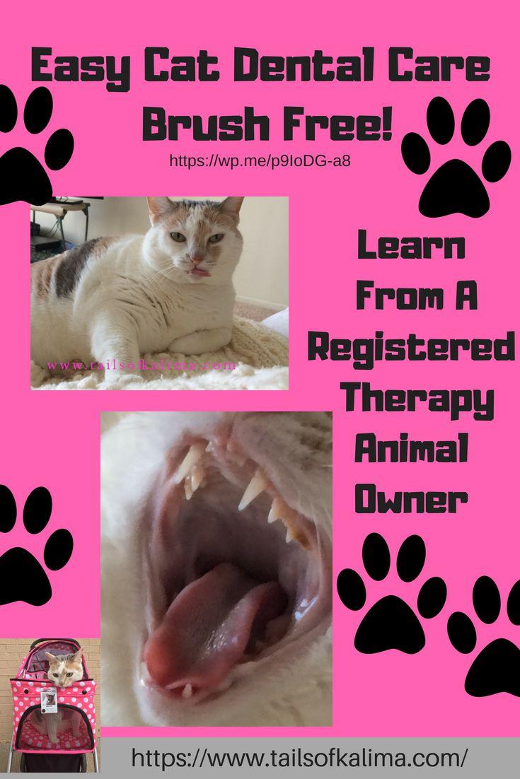 Cat dental care no more brushing dental care dental