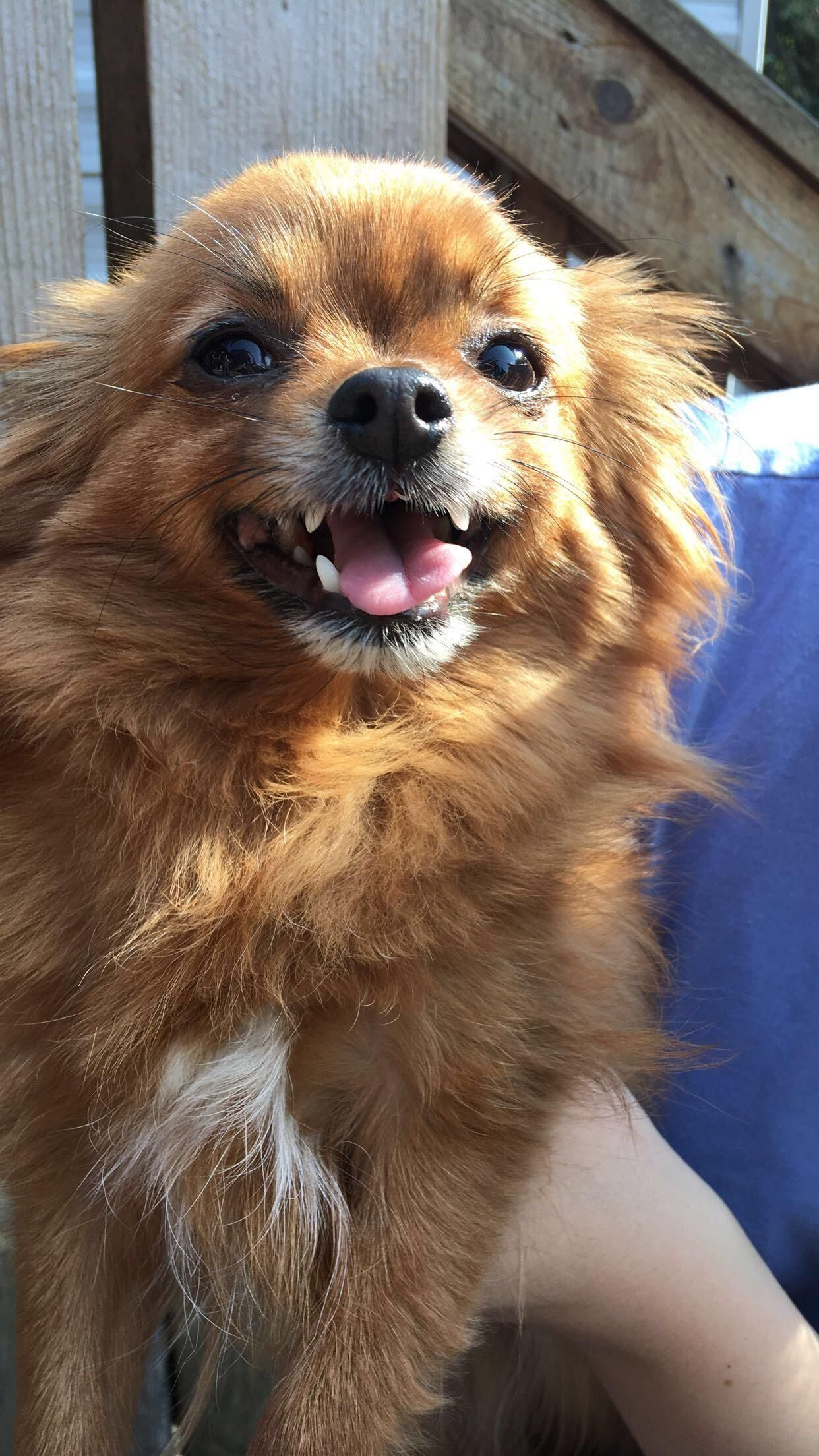 Meet grizzly cute dogs dog aww puppy adorable dogs