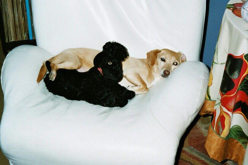 Meine Lollorossita, eigentlich Lulu, hihi, ein Traum von einem Hund, gescheit, lieb und sooo folgsam. UUUUnvergessen.