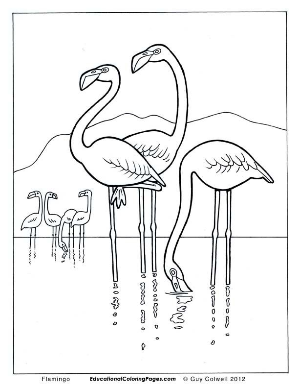 Flamingo coloring pages flamingo