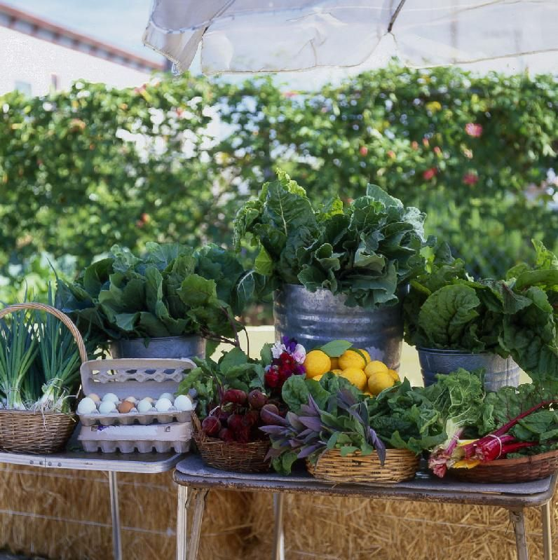 We should check this out some time.  Community Market Farms Program | City Slicker Farms