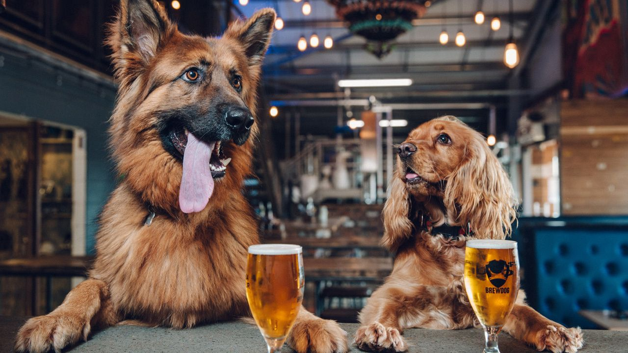 Brewdog Brewery Launches Beer For Dogs So Owners Can Host Pawties Dog Friends Dogs Dog Daycare
