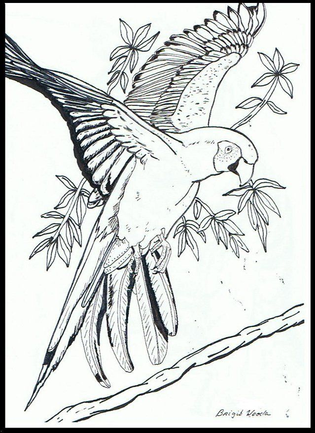 Pin by Kristen Woody on Sanctuary | Pencil drawings, Bird ...
