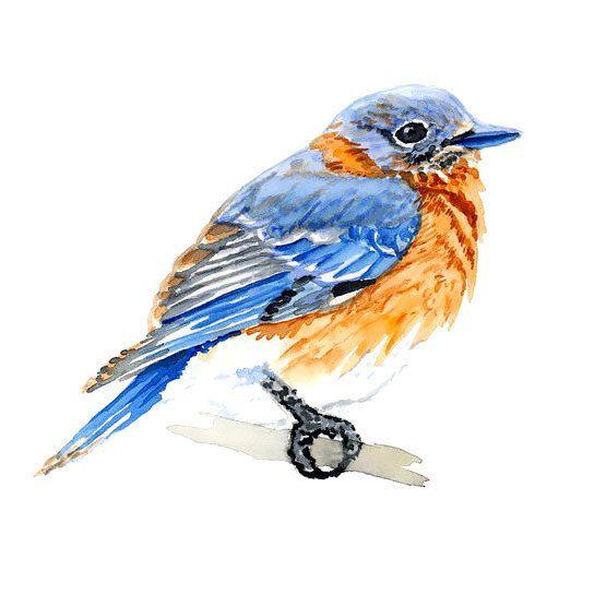 45 Cute Bluebird Tattoo Designs Cute Simple Bluebird Blue Bird Art Bird Watercolor Paintings Bird Art