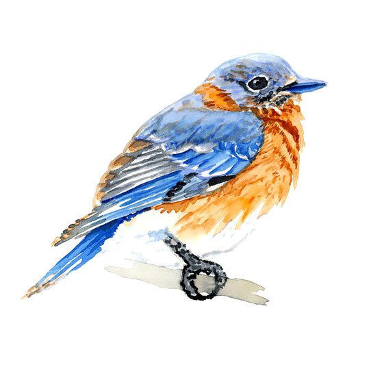 Cute Simple Bluebird Tattoo Design Blue Bird Art Bird Art