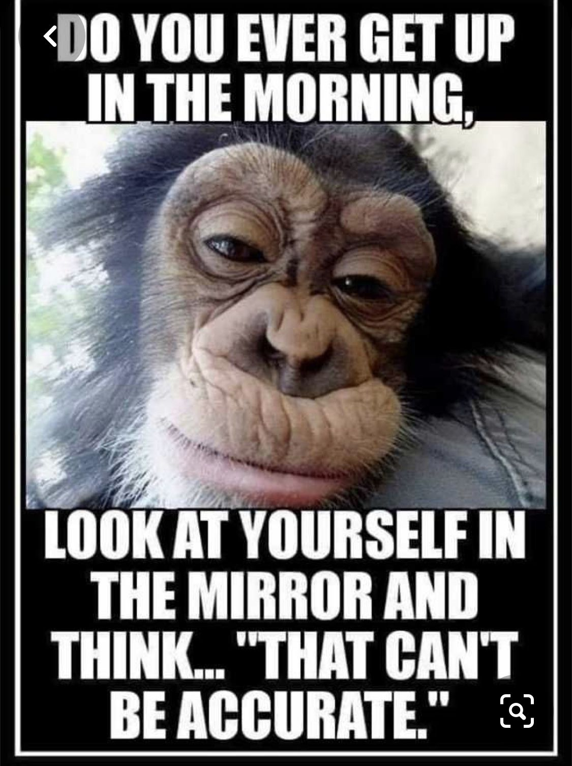 Pin By Laura Harvell On Clip Art Pictures Morning Quotes Funny Funny Good Morning Quotes Funny Quotes
