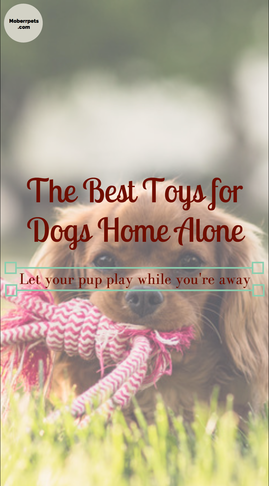 Best Toys For Puppies Home Alone Dog Toys Best Toys For Puppies Best Dog Toys