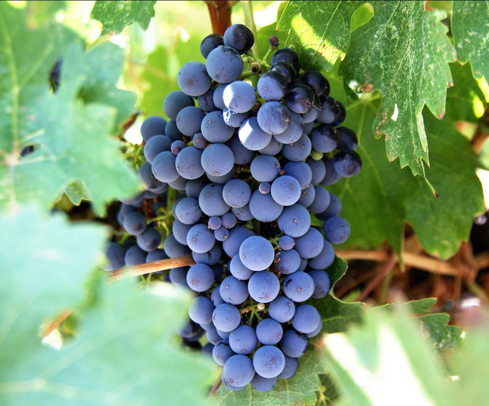 Your Map to the Lehigh Valley Wine Trail The Sayre