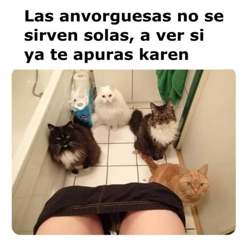 Memes De Karen Y Su Gato Segunda Parte Memes En Espanol La Mejor Recopilacion De Memes Lo Mas Viral De Memes Memes Divertidos Memes Graciosos De Animales
