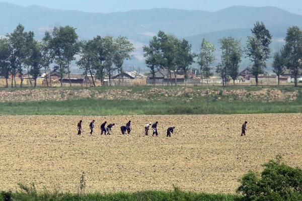 North Korea food rations fall short of U.N. recommendations