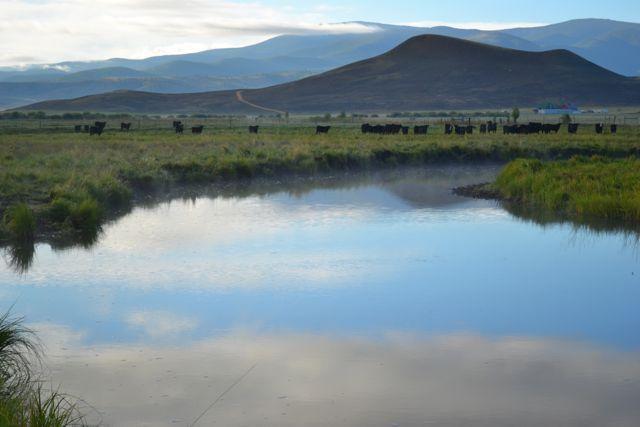 Tomichi Creek Ranch, near Gunnison