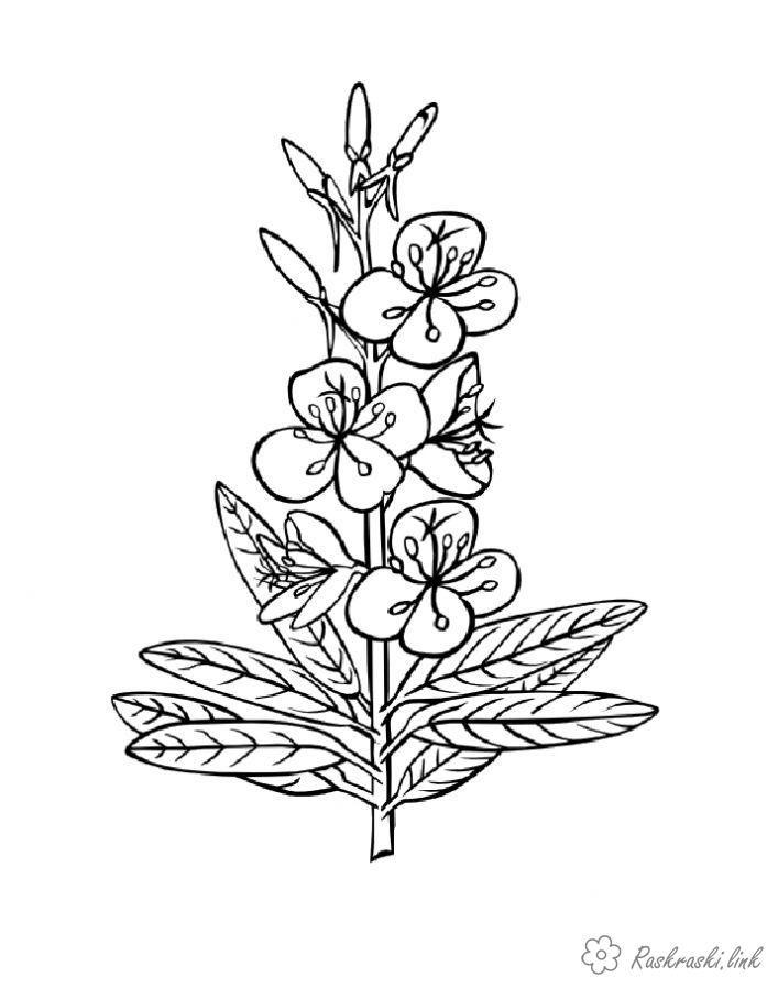 раскраски растения, природа, цветы | Раскраски, Цветочные ...