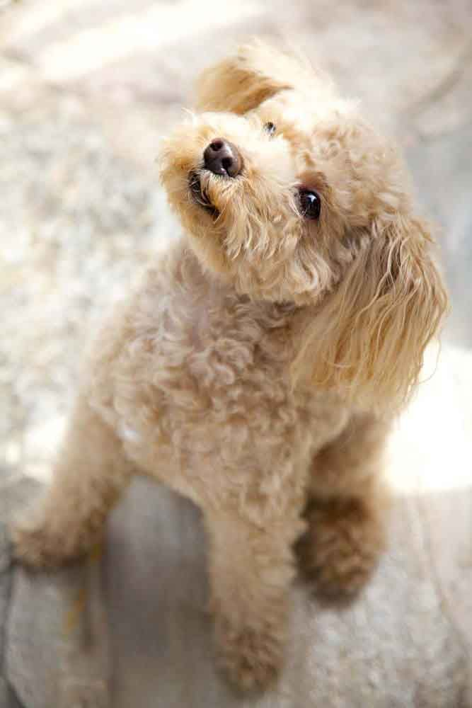 Male Dog Names Top Ideas For The Popular Male Puppy Dog Names