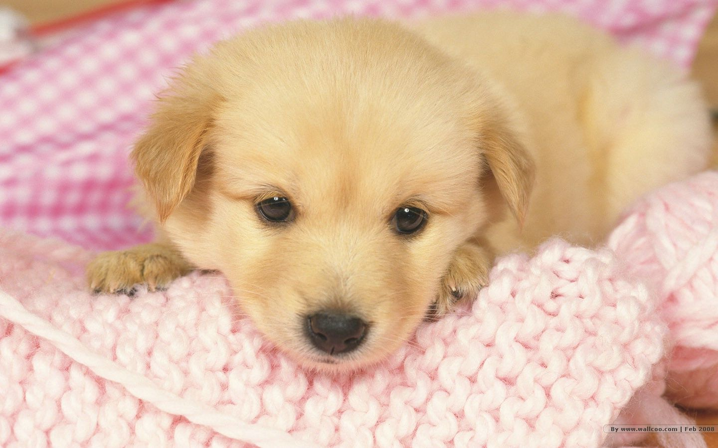 Cute puppy wallpaper ...