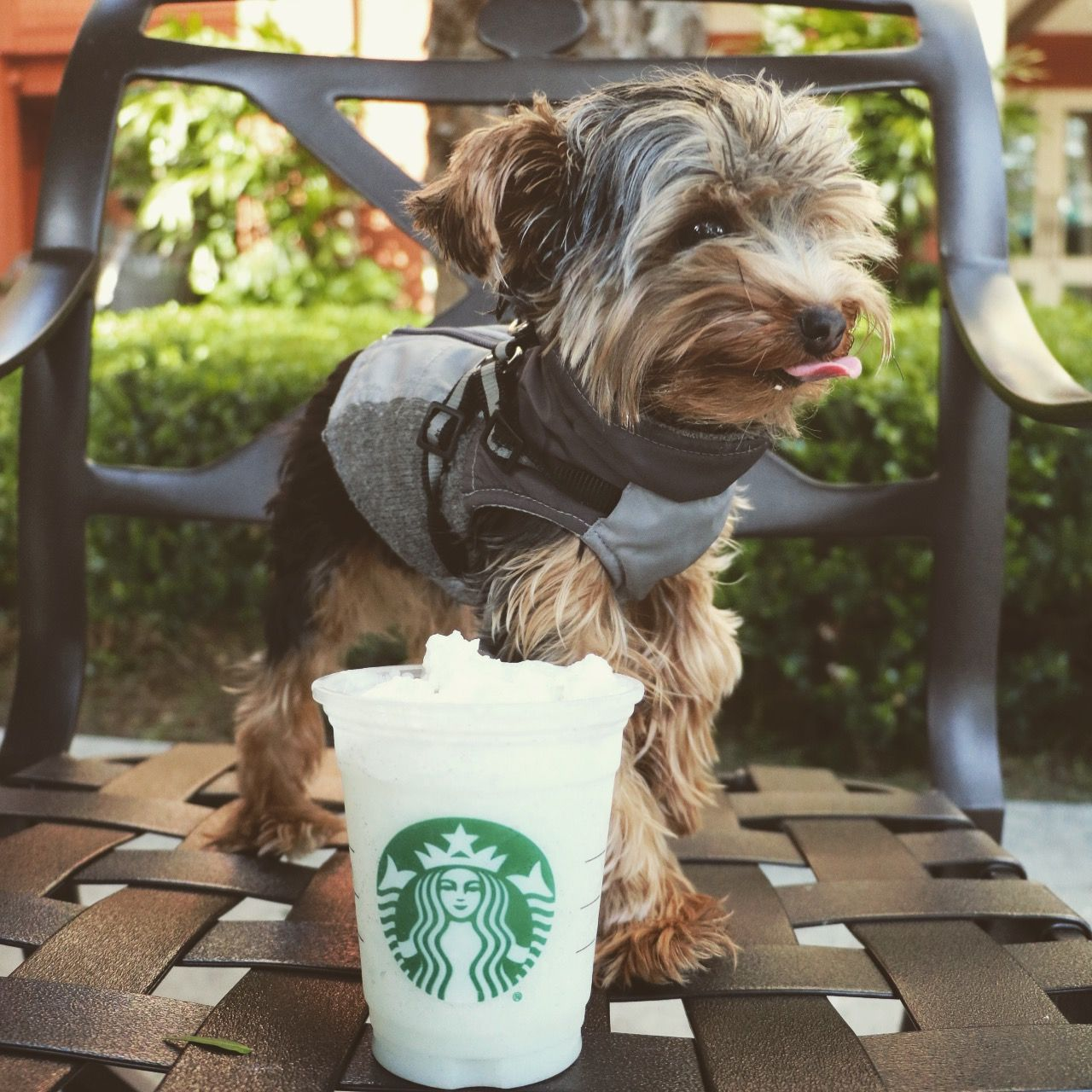 Starbucks for a perfect sunny day! Yorkie, Yorkshire