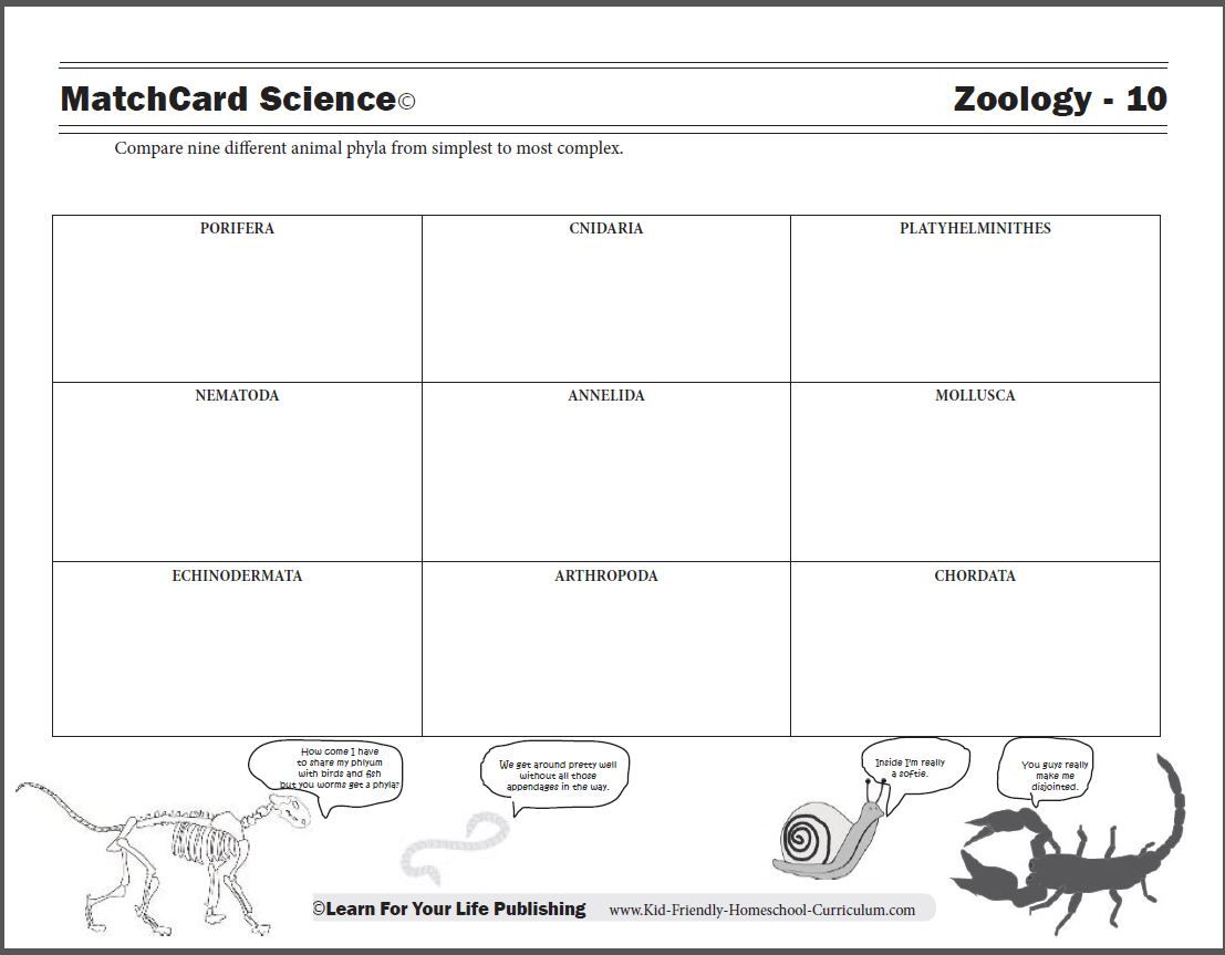 Worksheets Animal Habitats Worksheets the nine most common animal phyla range from simple cells to free worksheet provides a chart of for kids in upper elementary and middle school