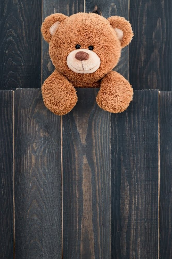 Tady bear wallpaper