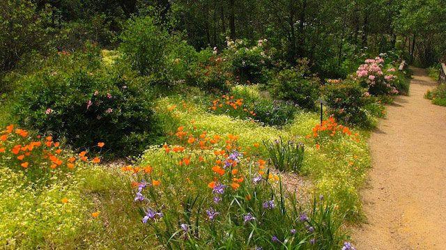 Wild In The City Wild Flowers Garden Design Meadow Garden