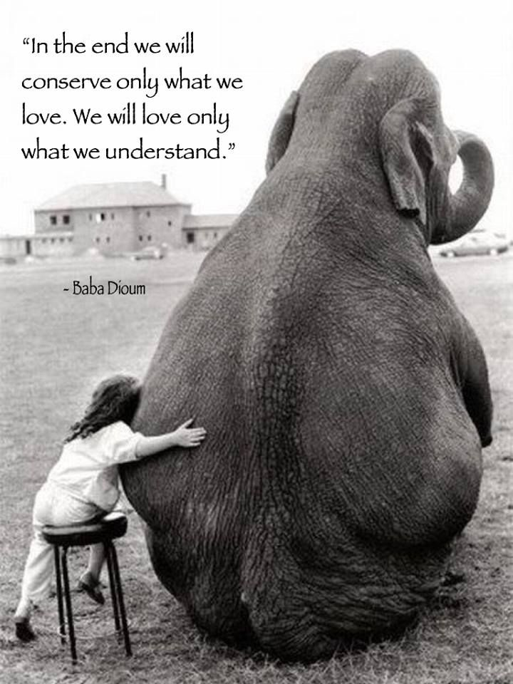In The End We Will Conserve Only What We Love We Will Love Only