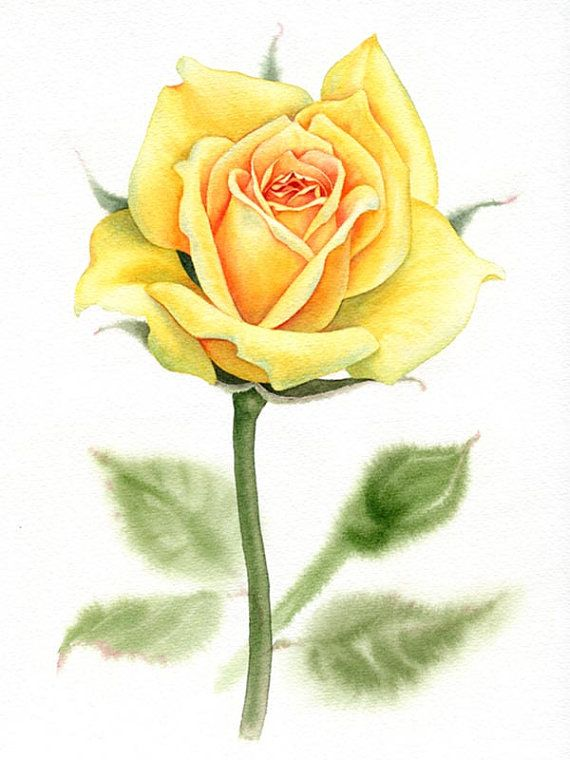 Watercolor Rose Painting With Images Rose Painting Watercolor
