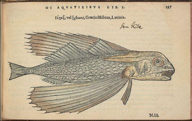 De Aquatilibus' by Pierre Belon 1553.