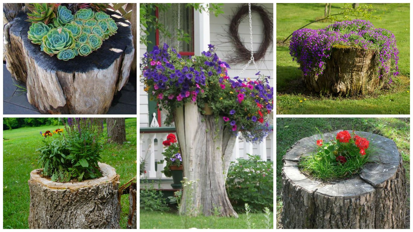 14 Interesting Ideas How To Decorate Your Garden With Tree Stumps ...