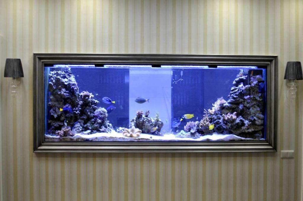 сообщения случаях плоский аквариум на стену фото массив сложен четырьмя