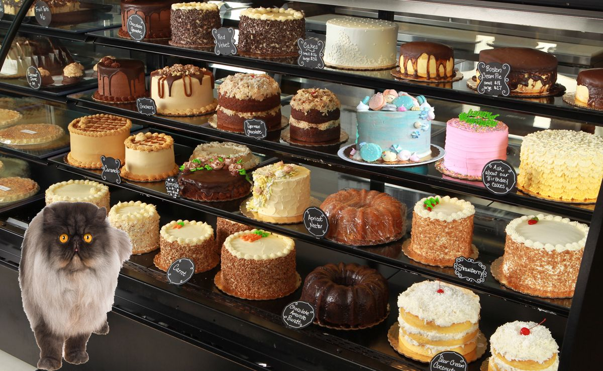 What is Figaro doing? Best bakery, Bakery cakes, Bakery