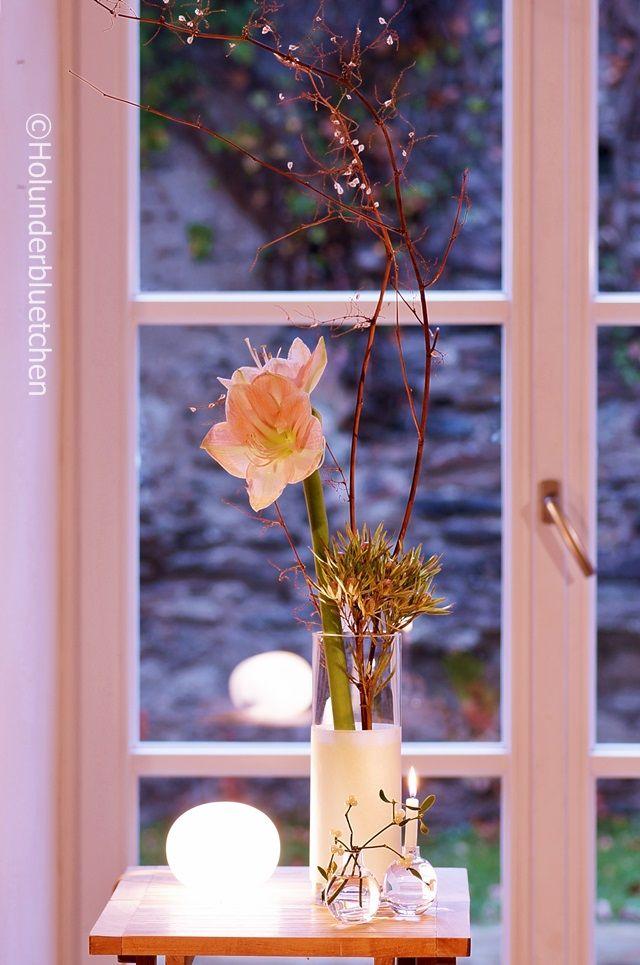 Amaryllis, Protea, Knöterich mistletoe | floral and seasonal ...