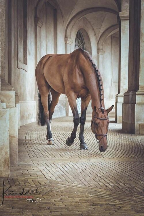 Most Inspiring Images And Photos Page 16 Horses Horse Wallpaper Pretty Horses