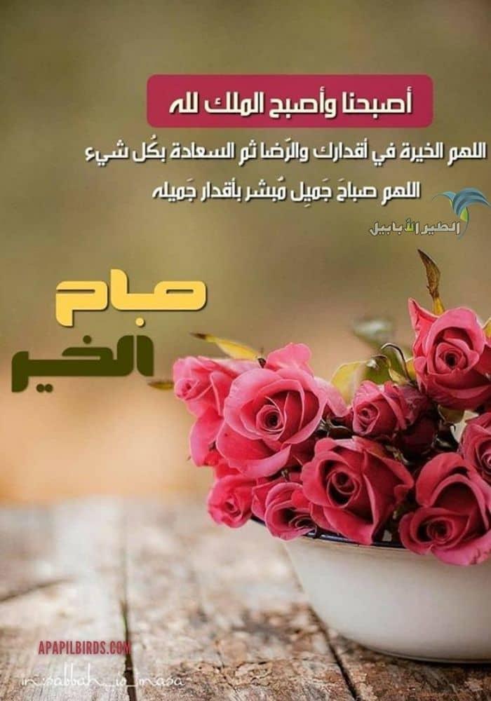 اروع 7 ادعية صباح الخير بالصور اجمل بطاقات دعاء الصباح مع الصور ستجدها على الانترنت