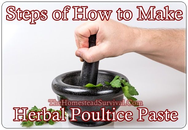 Steps of How to Make Herbal Poultice Paste Homesteading  - The Homestead Survival .Com