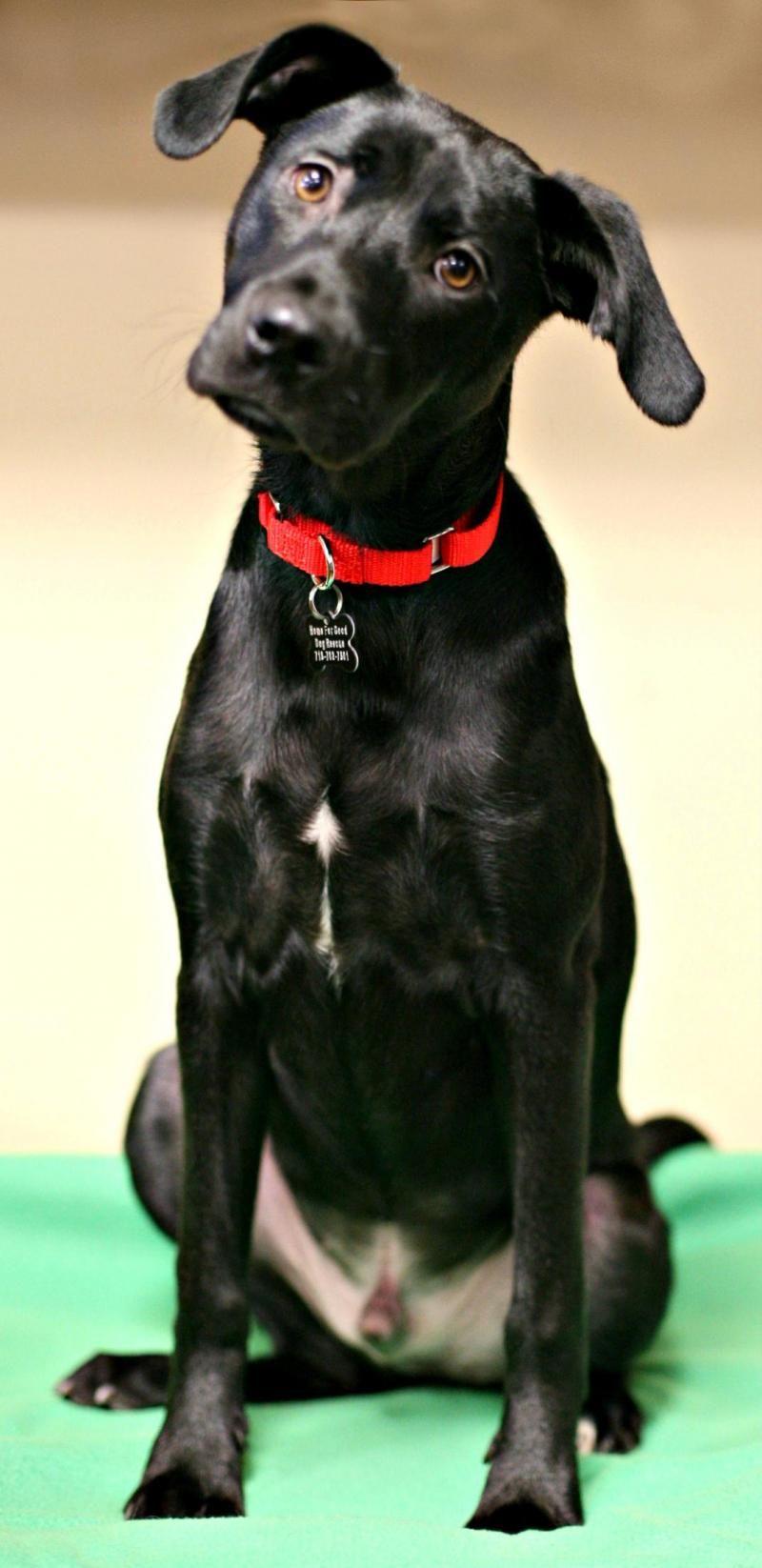 Brutus Dog Adoption Dogs Rescue Dogs