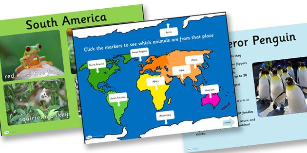 Animals From Around The World Powerpoint  Geography KS1