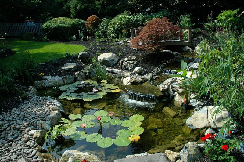 Putting the eco in pond ecosystems plants pond for Garden pool ecosystem