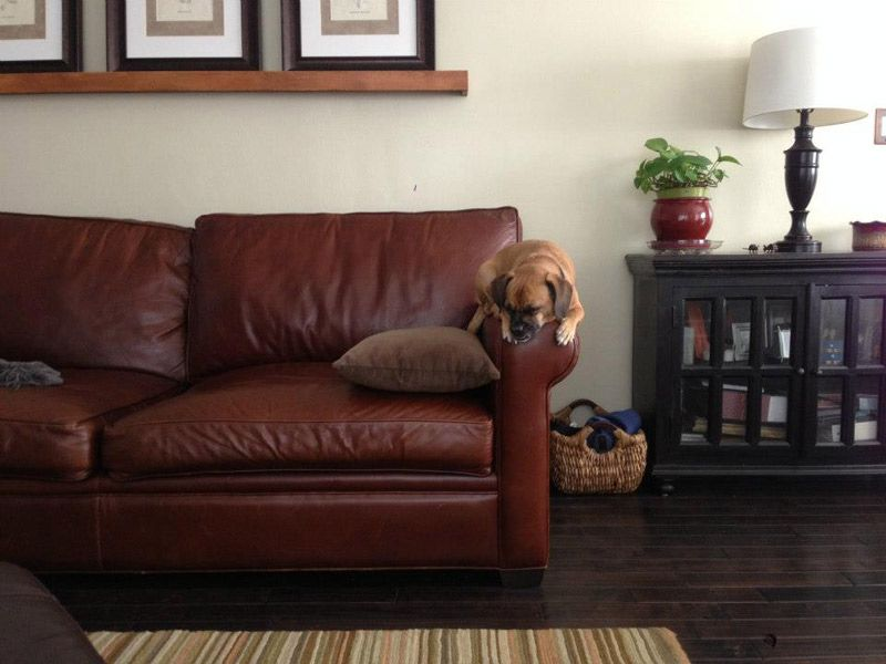 High Quality How To Have A Pet Friendly Home Thatu0027s Also Chic And Stylish