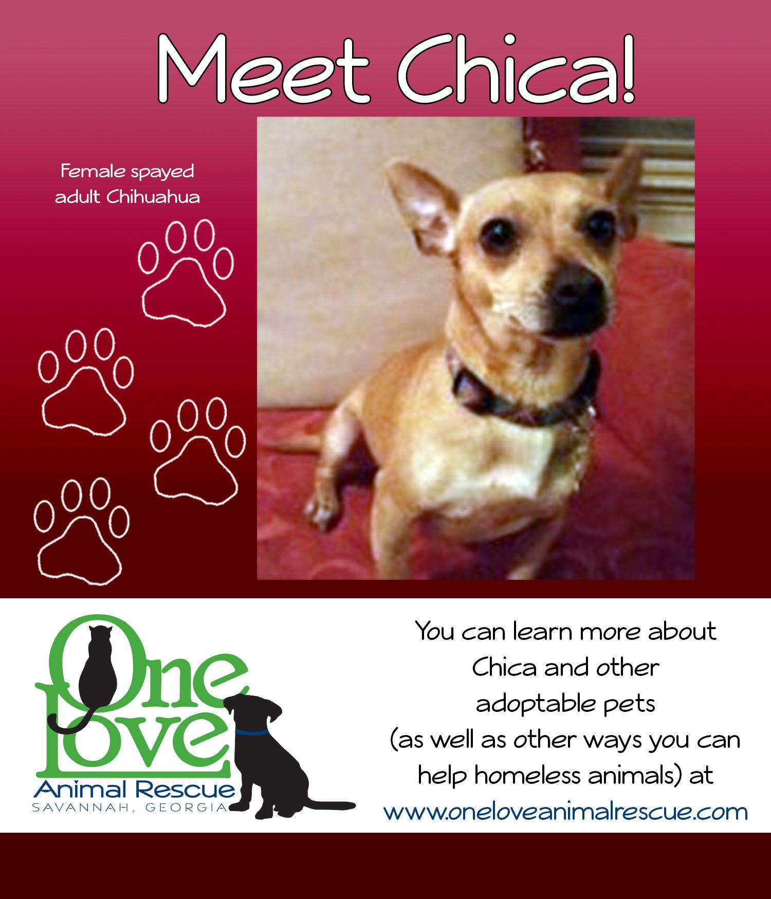Pin by One Love Animal Rescue GA on HAPPY TAILS! ADOPTED