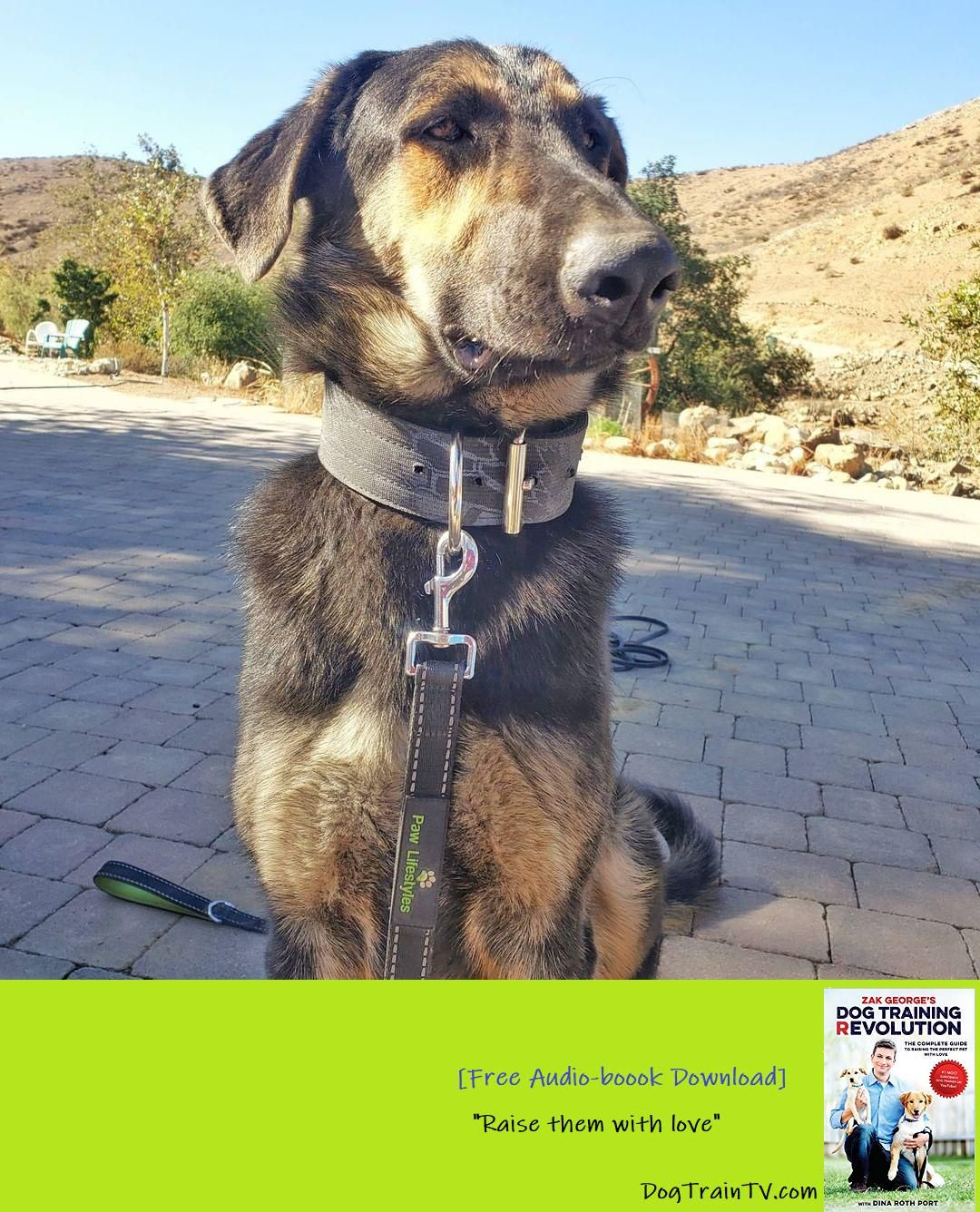 Kylo Ren Is Working On His Confidence Visit Happydogtraining Info To Take Your Dog To