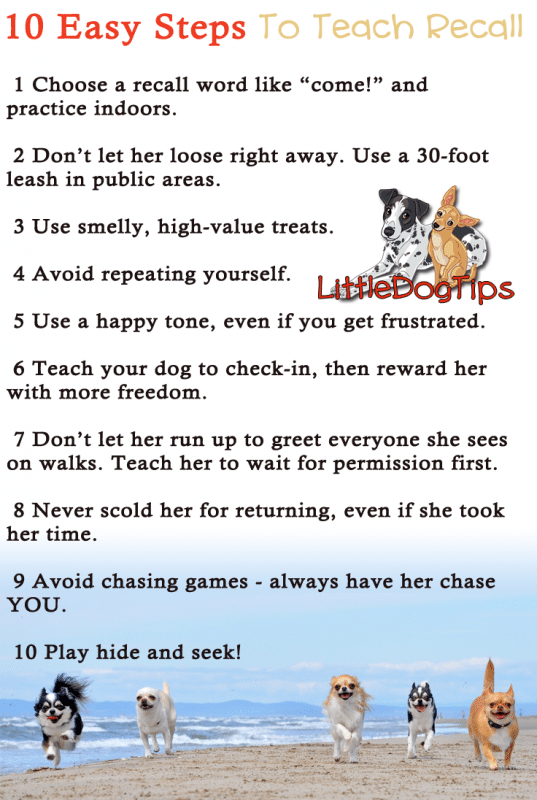 Near Perfect Recall 10 Tips To Teach Your Dog To Come When Called