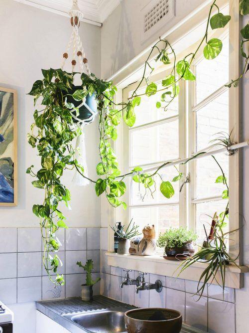 Le piante d'appartamento più belle per arredare la casa ...