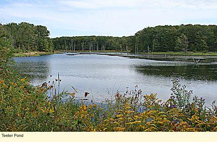 pin by ilovethefingerlakes on finger lakes national forest rh pinterest com