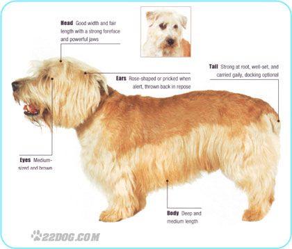 Description of glen of imaal terrier cutie patooties pinterest description of glen of imaal terrier thecheapjerseys Image collections