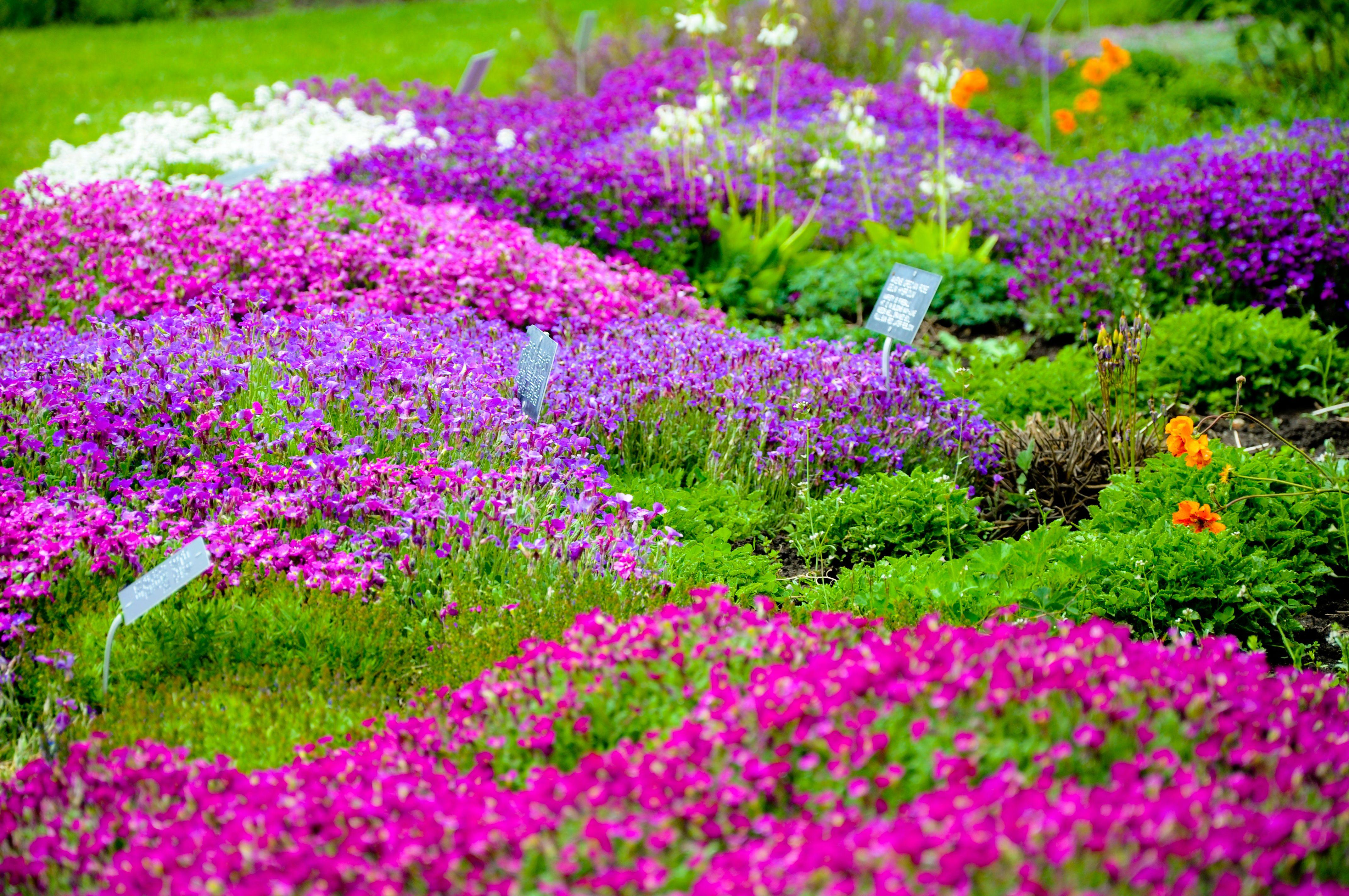 Garden of flowers by kayellaneza on deviantart gardens galore garden of flowers by kayellaneza on deviantart izmirmasajfo