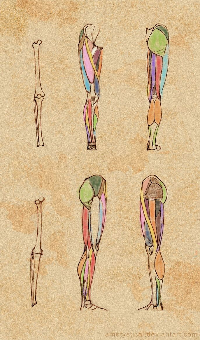 Right) Leg Study by Ametystical | Sketches and Anatomy | Pinterest ...