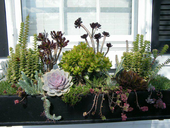 Relativ garten pflanzen balkon gestalten sukkulenten arrangieren ideen  PR34
