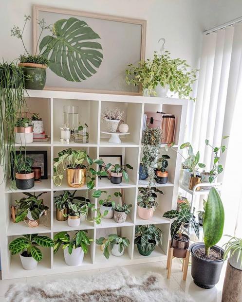 Plant Shelf Foliageplants Foliage Plants Inspiration In 2020 Plant Decor Indoor House Plants Decor House Plants Indoor