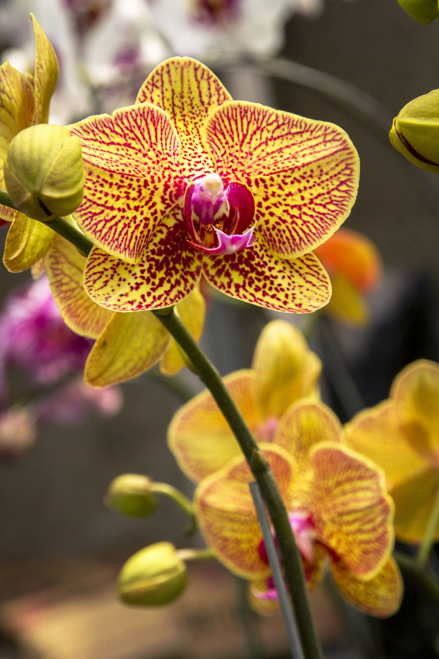 Comment Arroser Une Orchidee In 2020